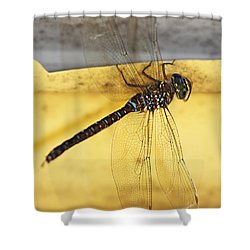 Shower Curtain featuring the photograph Dragonfly Web by Melanie Lankford Photography