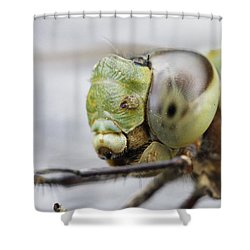 Dragon's Eye Shower Curtain by Shoal Hollingsworth