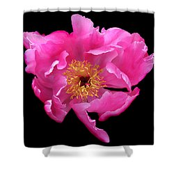 Dramatic Hot Pink Peony Flower Shower Curtain by Jennie Marie Schell