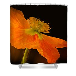 Dramatic Orange Poppy Shower Curtain