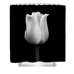 Dramatic Tulip Flower Black And White Shower Curtain