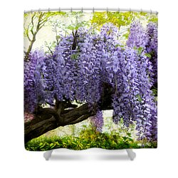 Superior Draping Wisteria Shower Curtain