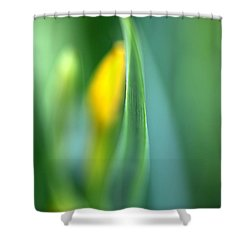 Dream Shower Curtain by Annie Snel