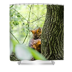 Shower Curtain featuring the photograph Dreaming Above All by Steven Santamour