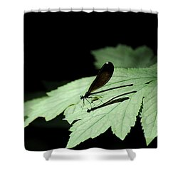 Dreaming Black Wings Shower Curtain by Rebecca Sherman