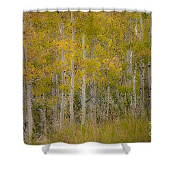 Dreaming Of Fall Shower Curtain