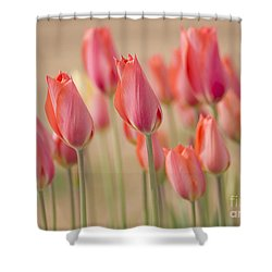 Dreamscape Shower Curtain by Nick  Boren