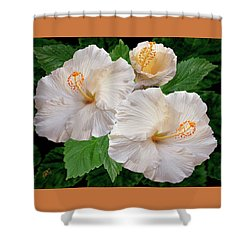 Dreamy Blooms - White Hibiscus Shower Curtain by Ben and Raisa Gertsberg