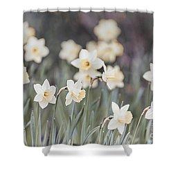 Dreamy Daffodils Shower Curtain by Elena Elisseeva