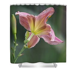 Shower Curtain featuring the photograph Dreamy Daylily by Patti Deters
