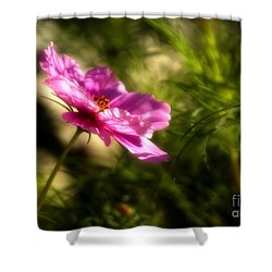 Dreamy Pink Comos Shower Curtain