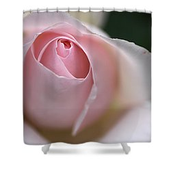 Shower Curtain featuring the photograph Dreamy Rose by Joy Watson