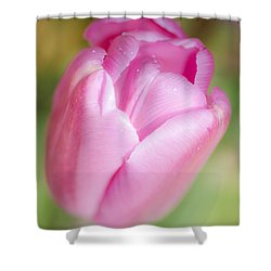 Dreamy Tulip Shower Curtain by Dee Cresswell
