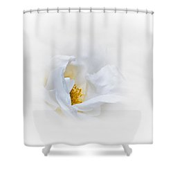 Dreamy White Rose Shower Curtain by Jane McIlroy