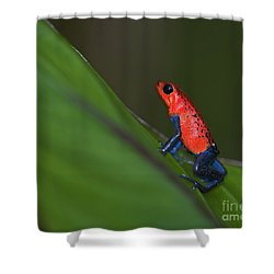 Dressed To Kill.. Shower Curtain by Nina Stavlund
