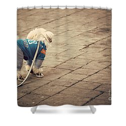 Dressed Up Dog Shower Curtain by Juli Scalzi