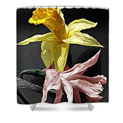 Shower Curtain featuring the photograph Dried Daffodils by Nina Silver