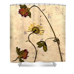 Dried Flowerrs 1 Shower Curtain