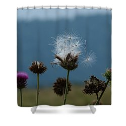 Shower Curtain featuring the photograph Drifting Off by Jane Ford