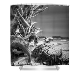 Driftwood At Race Point Shower Curtain