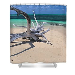 Driftwood On The Beach, Green Island Shower Curtain