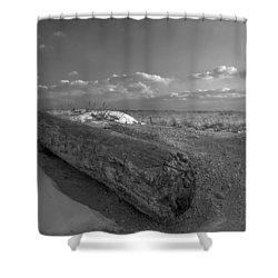 Driftwood Winter Shower Curtain