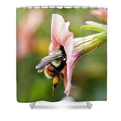 Drink In Summer Goodness Shower Curtain