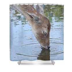 Drinking Doe Shower Curtain