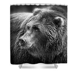 Drinking Grizzly Bear Black And White Shower Curtain