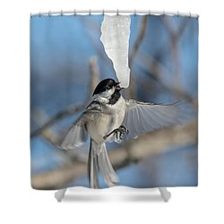 Drinking In Flight Shower Curtain by Cheryl Baxter