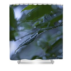 Drizzle - Shades Of Blue And Green Shower Curtain by Jane Eleanor Nicholas