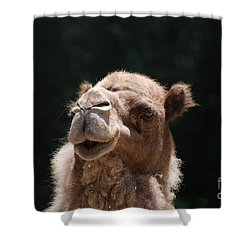 Dromedary Camel Face Shower Curtain