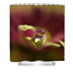 Drop On Petal Shower Curtain