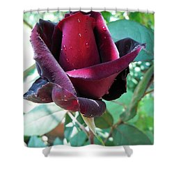 Shower Curtain featuring the photograph Droplets On The Petals by Vesna Martinjak