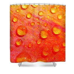 Drops On Flower Petals Shower Curtain by Tommytechno Sweden