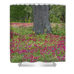 Shower Curtain featuring the photograph Drummonds Phlox And Crown Tickweed Central Texas by Dave Welling