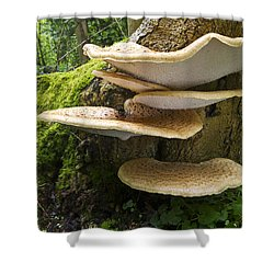 Dryads Saddle Mushrooms On Tree Trunk Shower Curtain by Edwin Rem