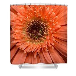 Dsc260d2 Shower Curtain by Kimberlie Gerner