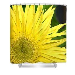 Dsc300d-002 Shower Curtain by Kimberlie Gerner