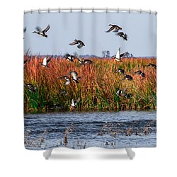 Duck Blind Shower Curtain