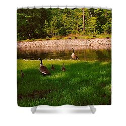 Duck Family Getting Back From Pond Shower Curtain