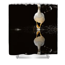 Duck On Stage Shower Curtain