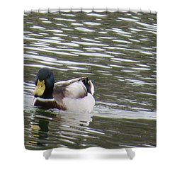 Duck Out For A Swim Shower Curtain