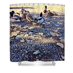 Duck Parade On The Beach Clackamette Park Shower Curtain