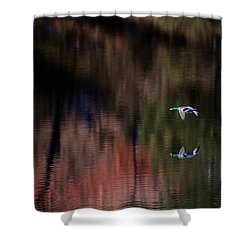Duck Scape 3 Shower Curtain