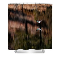 Duck Scape Shower Curtain
