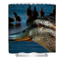 Duck Watching Ducks Shower Curtain by Bob Orsillo