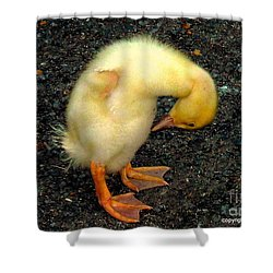 Duckling Takes A Bow Shower Curtain