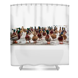 Duckorama Shower Curtain
