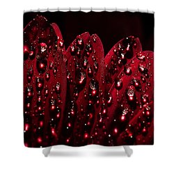 Shower Curtain featuring the photograph Due To The Dew by Joe Schofield